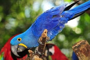 Parque das Aves é uma visita quase obrigatória