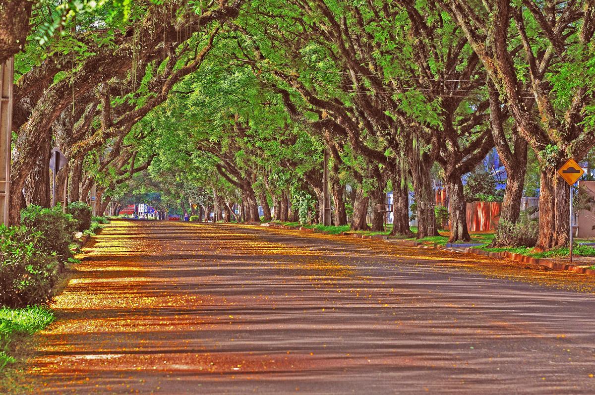A linda Avenida Pedro Basso, em Foz do Iguaçu - Foto: Marcos Labanca
